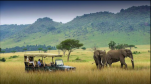Hire Toyota Land Cruiser hilux land rover defender to masai mara national Park reserve