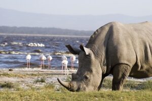 Lake Nakuru National Park Game road trip Safari Self-Drive 4x4 Jeep Car Hire Nairobi Kenya