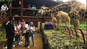Hire 4x4 Jeep Car to Nairobi giraffe Centre