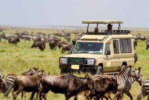 Safari self-drive Road trip to Nairobi National Park