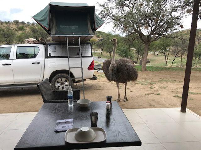 Toyota Hilux Double Cabin Safari Self-Drive & Camping Car Rental Nairobi Kenya